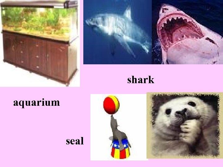 shark aquarium seal