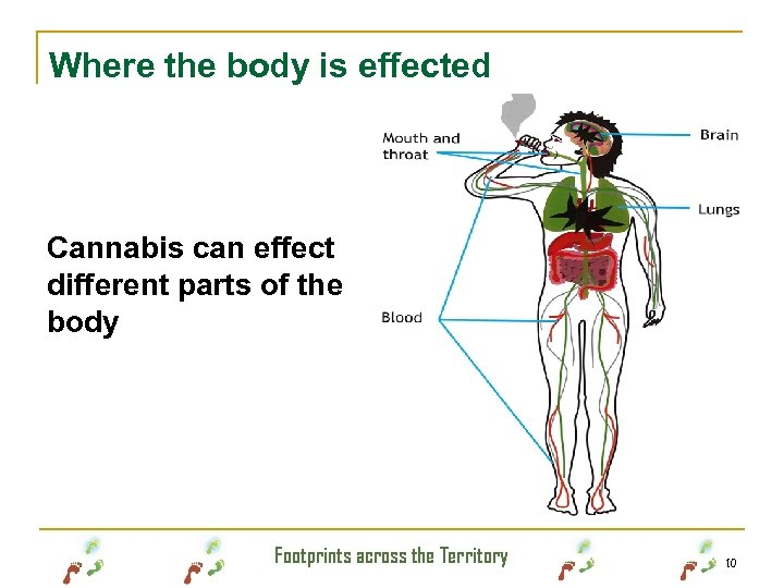 Where the body is effected Cannabis can effect different parts of the body Footprints