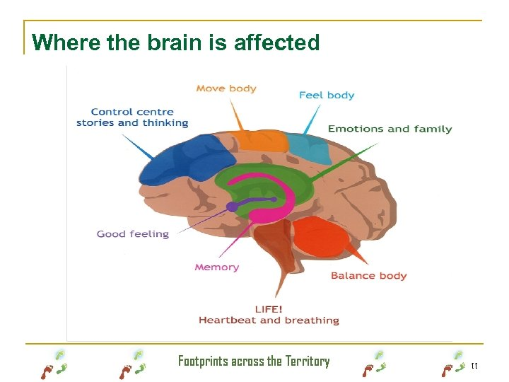Where the brain is affected Footprints across the Territory 11