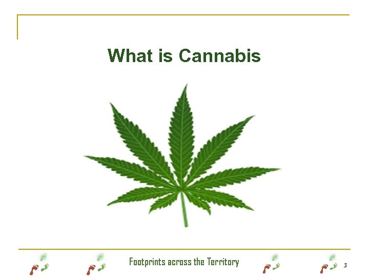 What is Cannabis Footprints across the Territory 3