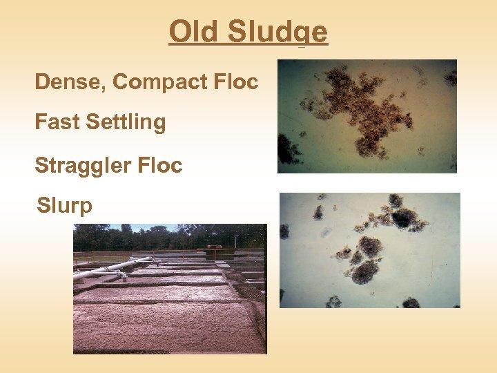 Old Sludge Dense, Compact Floc Fast Settling Straggler Floc Slurp