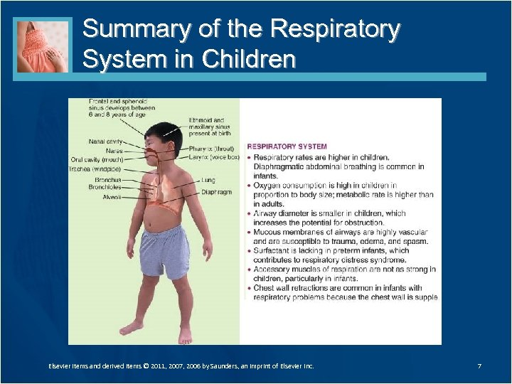 Summary of the Respiratory System in Children Elsevier items and derived items © 2011,