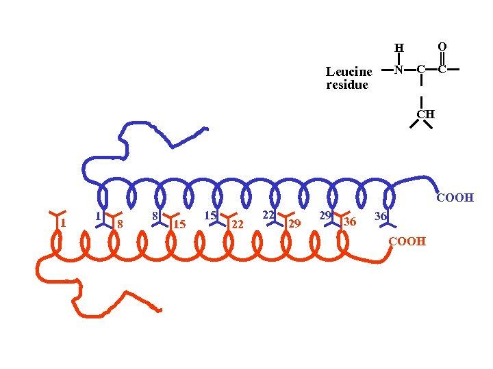 O H N Leucine residue C C CH COOH 1 1 8 8 15
