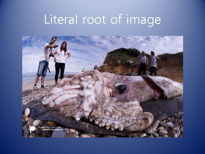 Literal root of image