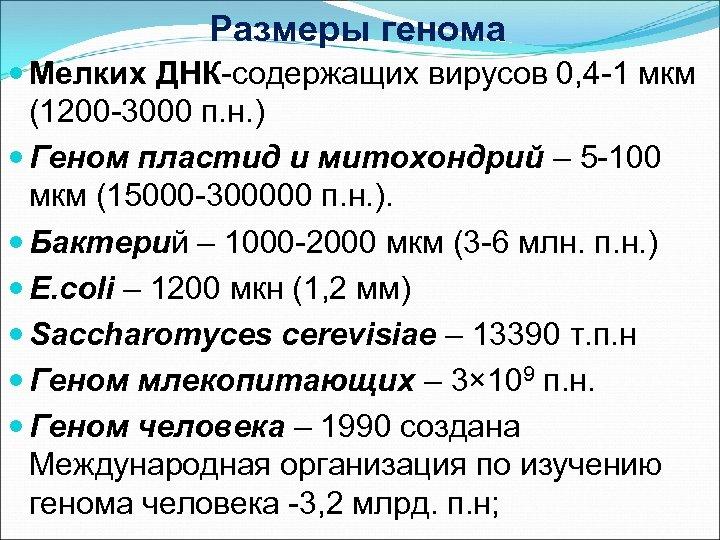 Размеры генома Мелких ДНК-содержащих вирусов 0, 4 -1 мкм (1200 -3000 п. н. )