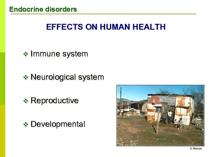 Endocrine disorders EFFECTS ON HUMAN HEALTH v Immune system v Neurological system v Reproductive