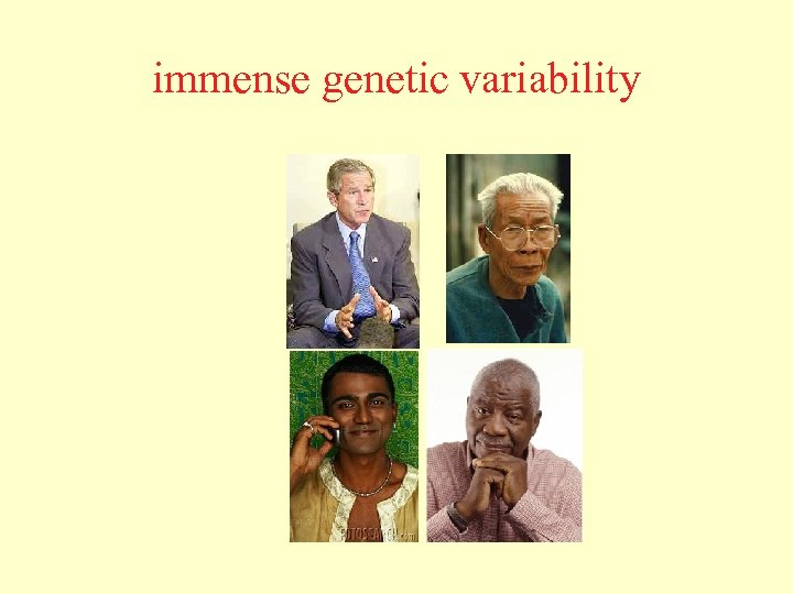 immense genetic variability