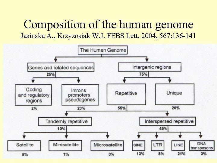 Composition of the human genome Jasinska A. , Krzyzosiak W. J. FEBS Lett. 2004,