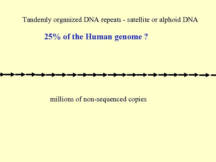 Tandemly organized DNA repeats - satellite or alphoid DNA 25% of the Human genome
