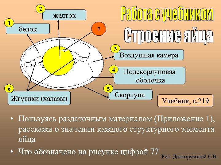 2 1 желток белок 7 3 4 6 5 Жгутики (халазы) Воздушная камера Подскорлуповая