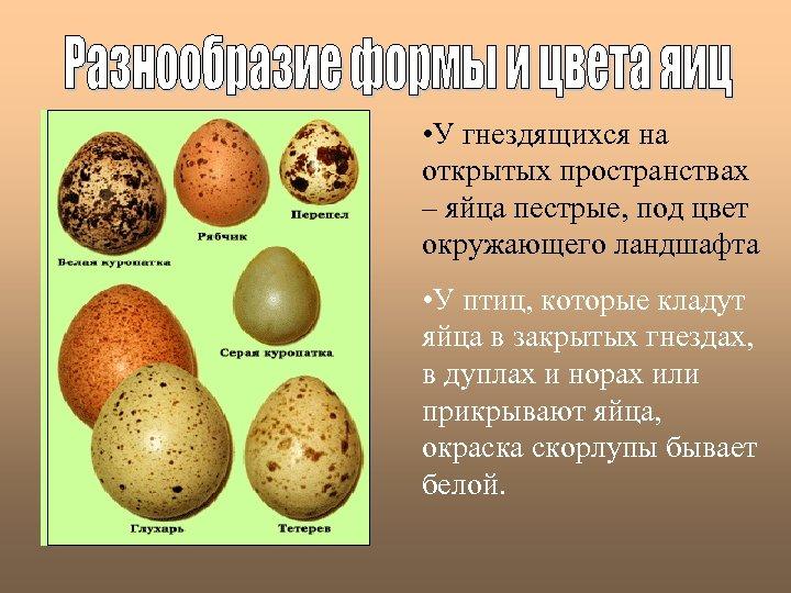• У гнездящихся на открытых пространствах – яйца пестрые, под цвет окружающего ландшафта