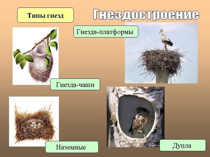 Типы гнезд Гнезда-платформы Гнезда-чаши Наземные Дупла