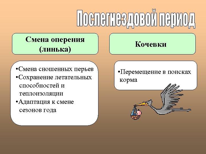 Смена оперения (линька) • Смена сношенных перьев • Сохранение летательных способностей и теплоизоляции •