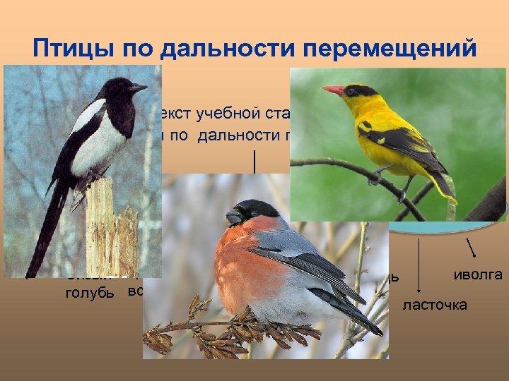 Птицы по дальности перемещений Прочитайте текст учебной статьи, составьте схему «Птицы по дальности перемещений»