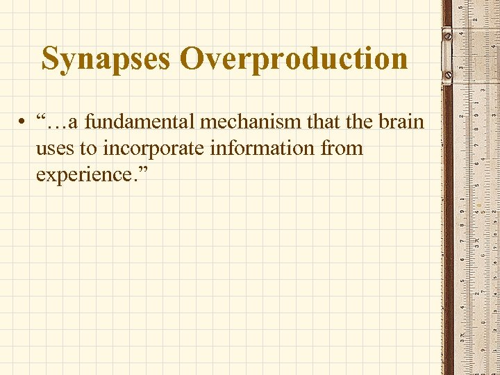 """Synapses Overproduction • """"…a fundamental mechanism that the brain uses to incorporate information from"""