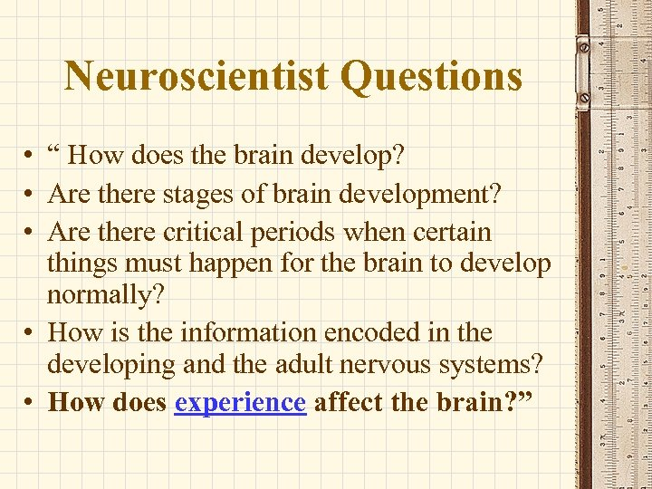 """Neuroscientist Questions • """" How does the brain develop? • Are there stages of"""