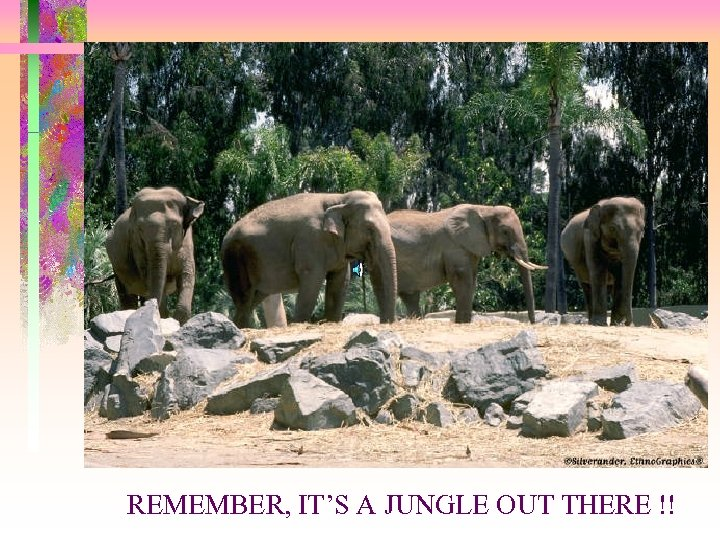REMEMBER, IT'S A JUNGLE OUT THERE !!