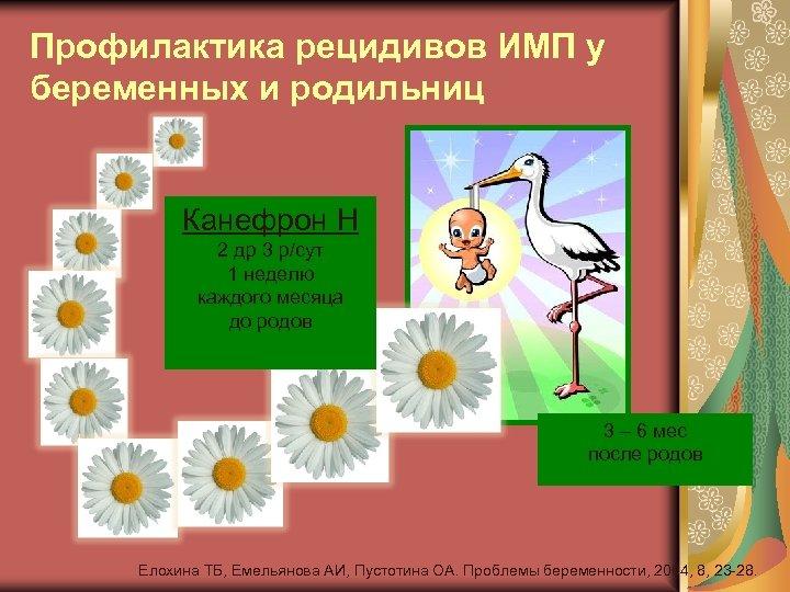 Профилактика рецидивов ИМП у беременных и родильниц Канефрон Н 2 др 3 р/сут 1