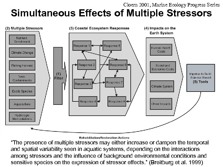 """Cloern 2001, Marine Ecology Progress Series Simultaneous Effects of Multiple Stressors """"The presence of"""