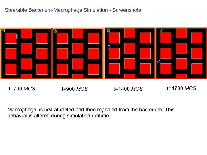 Steerable Bacterium-Macrophage Simulation - Screenshots: t=700 MCS t=900 MCS t=1400 MCS t=1700 MCS Macrophage