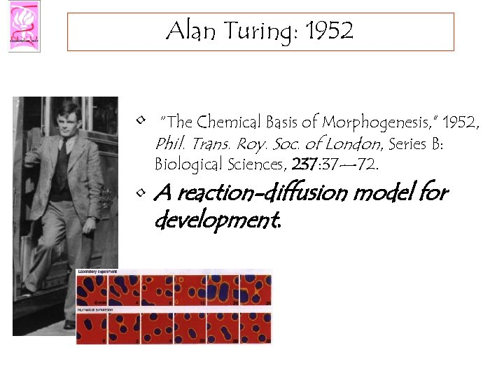 "Alan Turing: 1952 • ""The Chemical Basis of Morphogenesis, "" 1952, Phil. Trans. Roy."