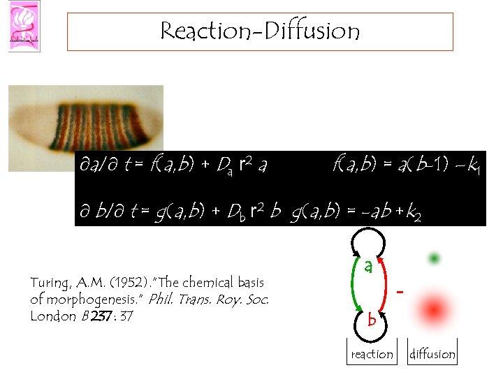 Reaction-Diffusion ¶a/¶ t = f(a, b) + Da r 2 a f(a, b) =