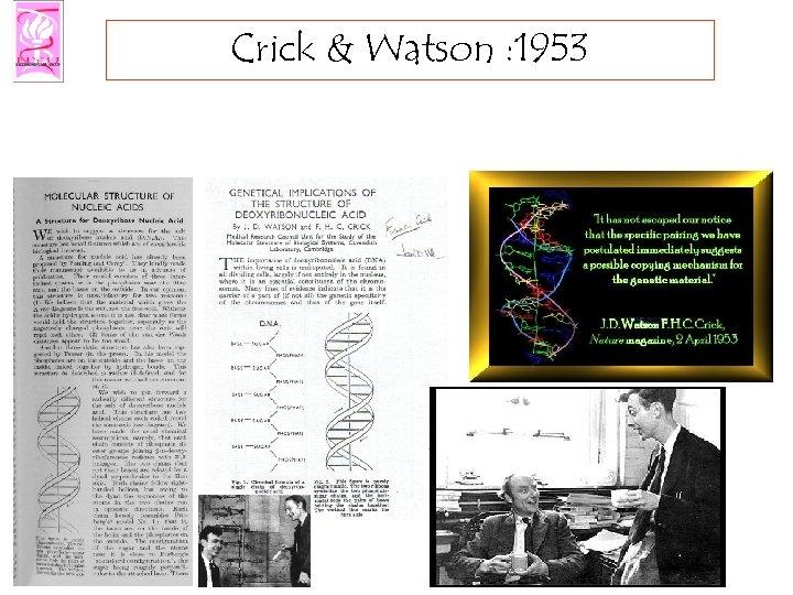 Crick & Watson : 1953
