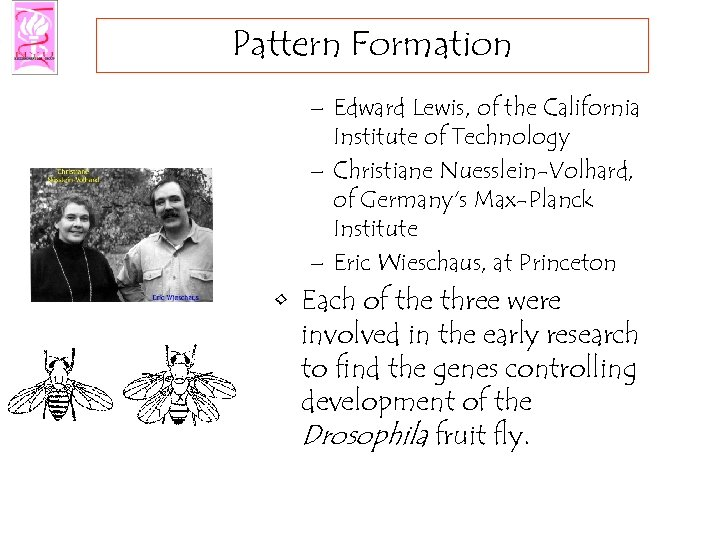 Pattern Formation – Edward Lewis, of the California Institute of Technology – Christiane Nuesslein-Volhard,