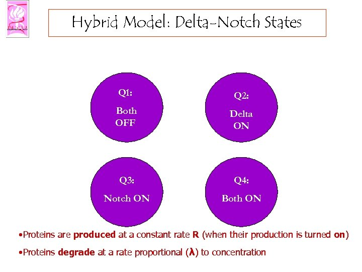 Hybrid Model: Delta-Notch States Q 1: Q 2: Both OFF Delta ON Q 3: