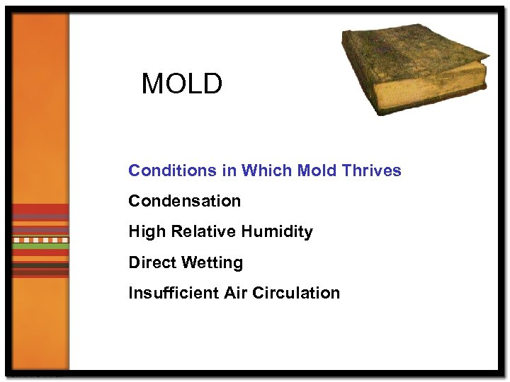 MOLD Conditions in Which Mold Thrives Condensation High Relative Humidity Direct Wetting Insufficient Air