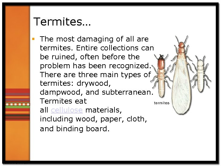 Termites… § The most damaging of all are termites. Entire collections can be ruined,
