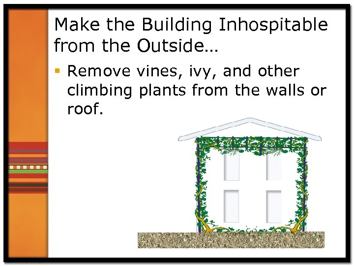 Make the Building Inhospitable from the Outside… § Remove vines, ivy, and other climbing