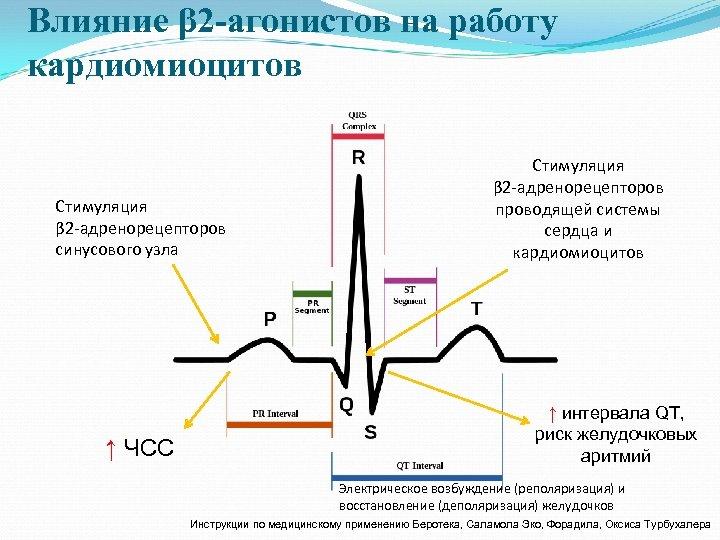 Влияние β 2 -агонистов на работу кардиомиоцитов Стимуляция β 2 -адренорецепторов синусового узла ↑