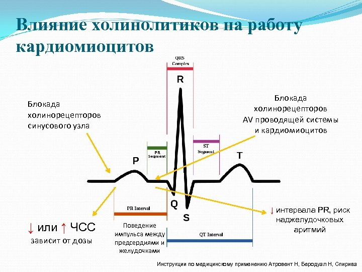 Влияние холинолитиков на работу кардиомиоцитов Блокада холинорецепторов AV проводящей системы и кардиомиоцитов Блокада холинорецепторов