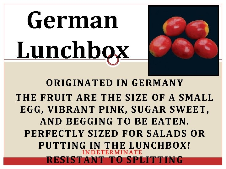 German Lunchbox ORIGINATED IN GERMANY THE FRUIT ARE THE SIZE OF A SMALL EGG,