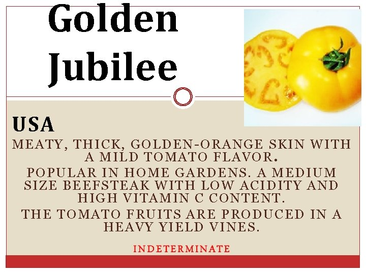 Golden Jubilee USA MEATY, THICK, GOLDEN-ORANGE SKIN WITH A MILD TOMATO FLAVOR. POPULAR IN