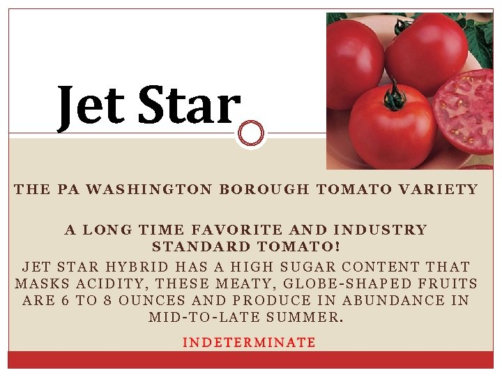 Jet Star THE PA WASHINGTON BOROUGH TOMATO VARIETY A LONG TIME FAVORITE AND INDUSTRY