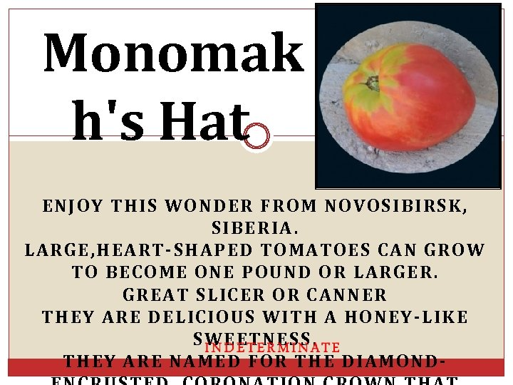 Monomak h's Hat ENJOY THIS WONDER FROM NOVOSIBIRSK, SIBERIA. LARGE, HEART-SHAPED TOMATOES CAN