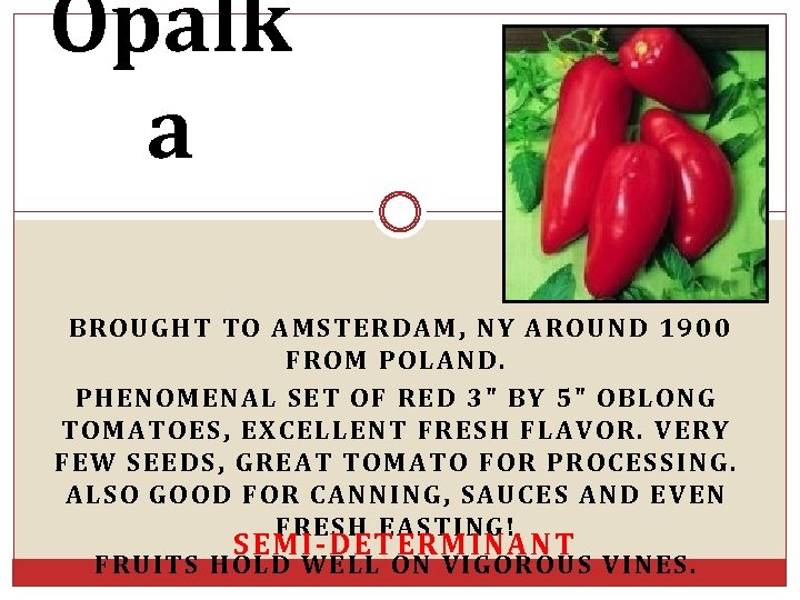 Opalk a BROUGHT TO AMSTERDAM, NY AROUND 1900 FROM POLAND. PHENOMENAL SET OF RED
