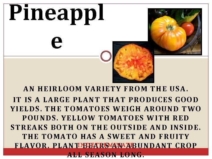 Pineappl e AN HEIRLOOM VARIETY FROM THE USA. IT IS A LARGE PLANT THAT