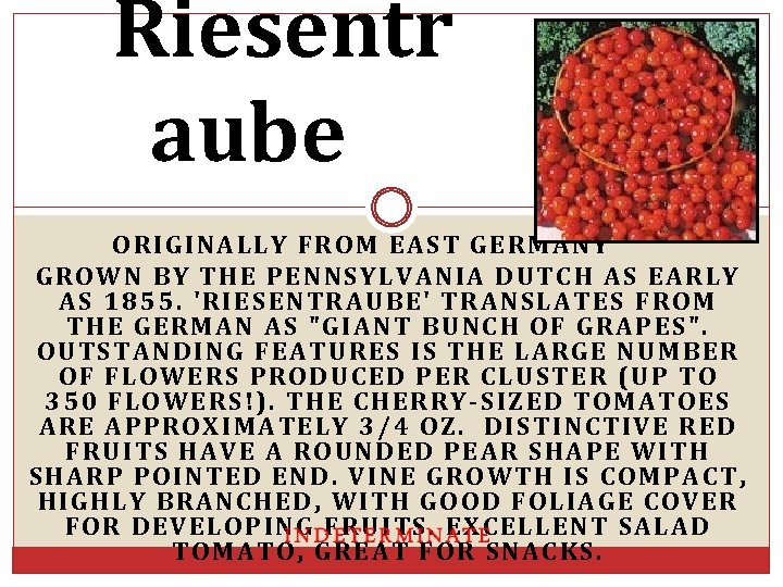 Riesentr aube ORIGINALLY FROM EAST GERMANY GROWN BY THE PENNSYLVANIA DUTCH AS EARLY AS