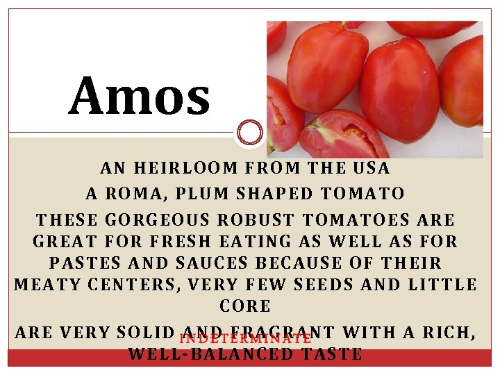 Amos AN HEIRLOOM FROM THE USA A ROMA, PLUM SHAPED TOMATO THESE GORGEOUS ROBUST