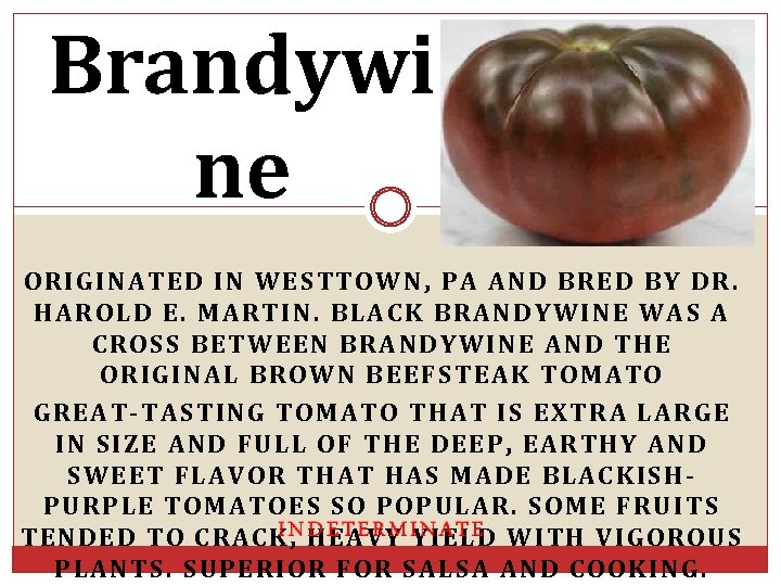 Brandywi ne ORIGINATED IN WESTTOWN, PA AND BRED BY DR. HAROLD E. MARTIN. BLACK