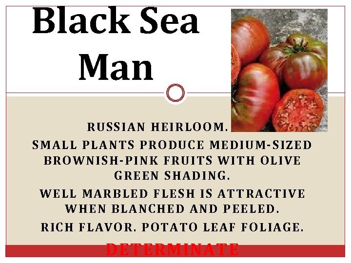 Black Sea Man RUSSIAN HEIRLOOM. SMALL PLANTS PRODUCE MEDIUM-SIZED BROWNISH-PINK FRUITS WITH OLIVE GREEN