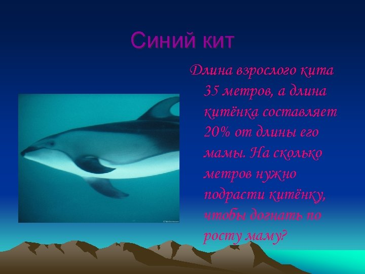 Синий кит Длина взрослого кита 35 метров, а длина китёнка составляет 20% от длины