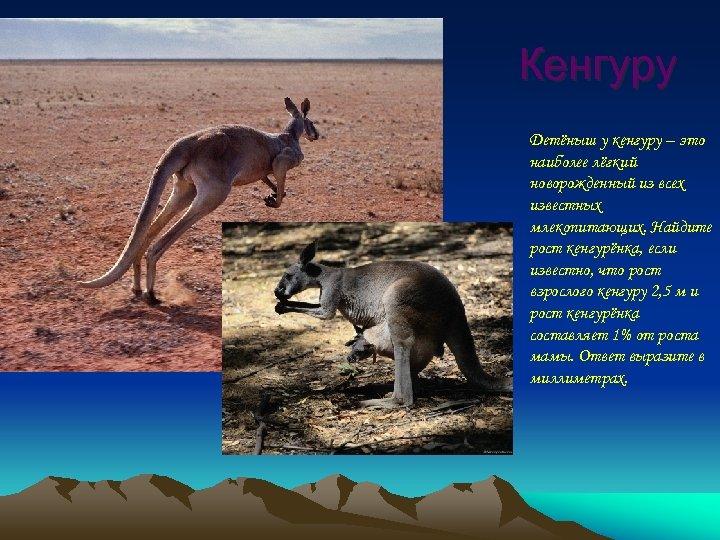 Кенгуру Детёныш у кенгуру – это наиболее лёгкий новорожденный из всех известных млекопитающих. Найдите