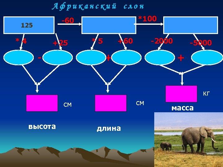 Африканский слон *100 -60 125 *4 +25 - *5 +60 -2000 + -5000 +