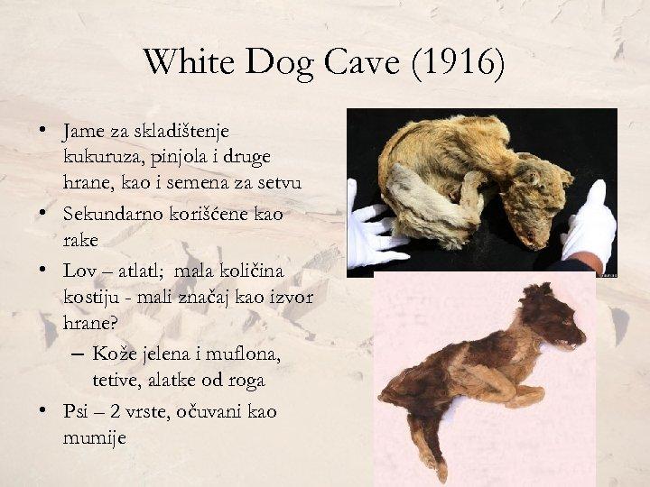 White Dog Cave (1916) • Jame za skladištenje kukuruza, pinjola i druge hrane, kao