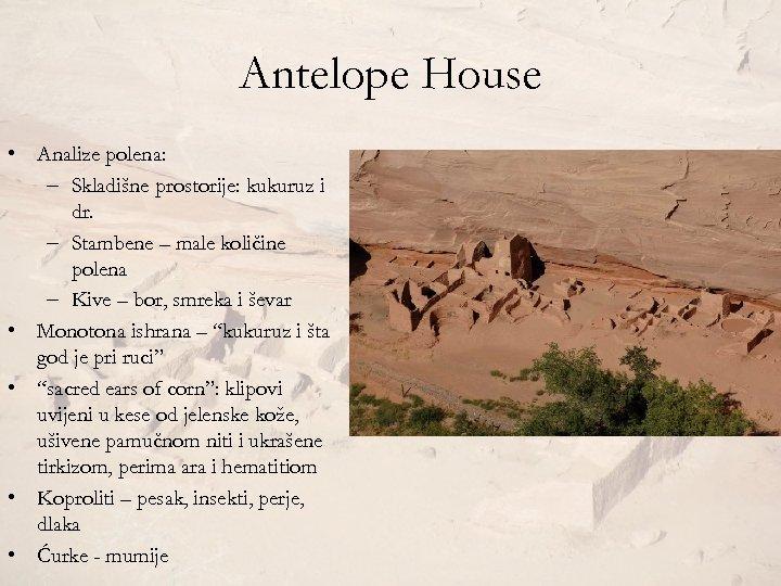 Antelope House • Analize polena: – Skladišne prostorije: kukuruz i dr. – Stambene –