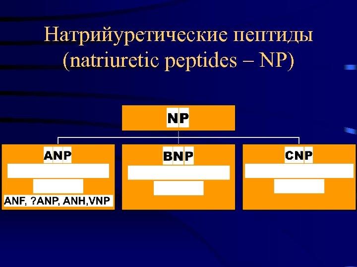 Натрийуретические пептиды (natriuretic peptides – NP)